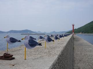 Sea Gulls Parking... Takahito Kimura